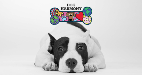 Dog-Harmony's Racquets for Rescues Sept 28