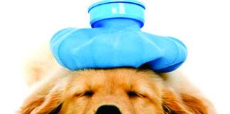 Sick Dog Placeholder