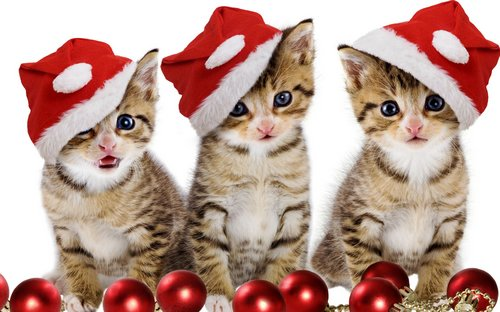 Pets In Christmas