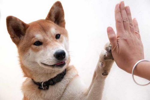 Dog Pycholoyg