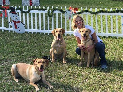 K9 Liberty With Board Member Carrie Fry. Liberty Is The Mother Of The Two Dogs From Our Bred For Purpose Program (sadie Mae And Lucy)