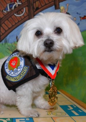 Riley Vertical Eccac Therapy Dog 2015 2