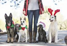 Dogs Christmas