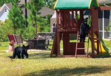 Bear Cub Playhouse Ladder