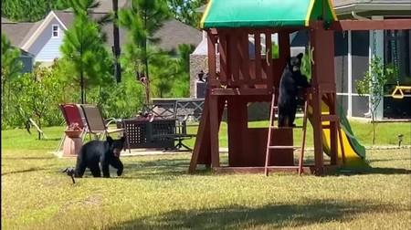 Bear Cub Playhouse Ladder