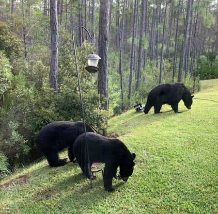 Bears And Birdfeeders