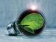 Energy Savings Light Bulb W Leaf