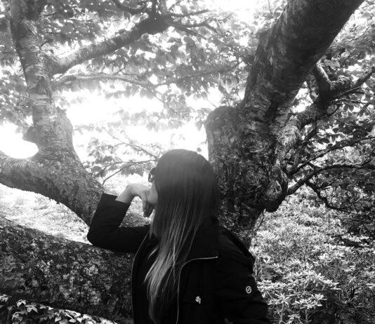 Lotus Life Tree