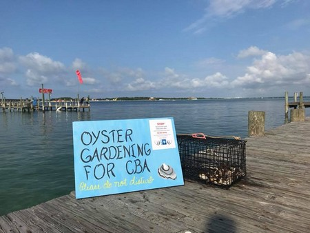 Oyster Gardening Destin