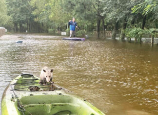 Alaqua Flood