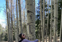 Lotus Life Trees