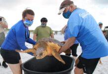 Gulfarium Saving Sea Turtles