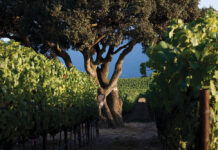 Krutz Vines