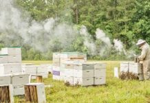 Bee Farmer Smoking Hives 1024x