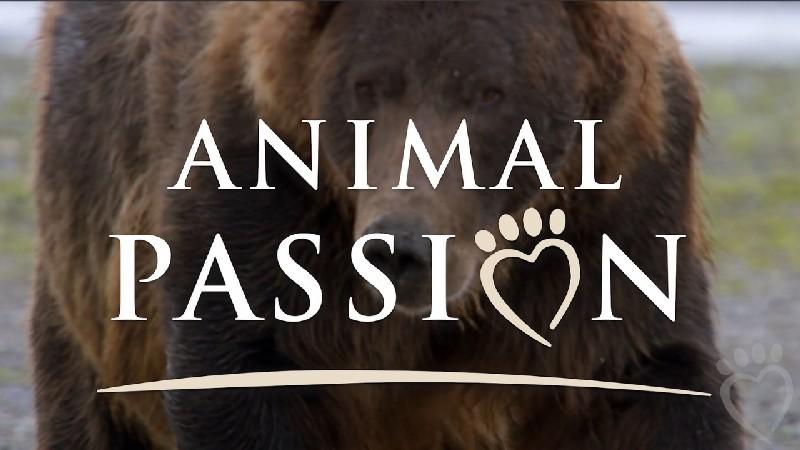 #3 Animal Passion Logo Alt